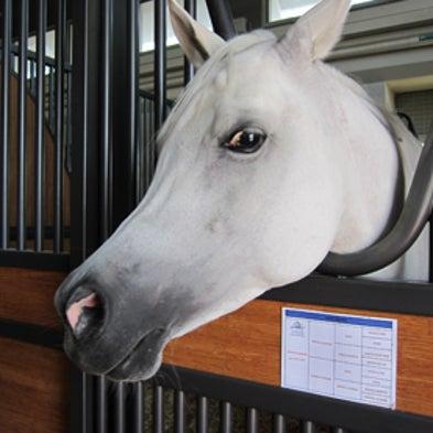 The Science of Arabian Horses [Slide Show]