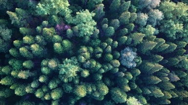 Forests Not Equal When It Comes to Climate