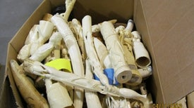 Illegal Ivory Set to Be Crushed in Times Square