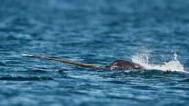 Unicorns of the Sea Reveal Sound Activities