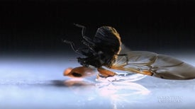 Wing Windows Reveal Insect Origami