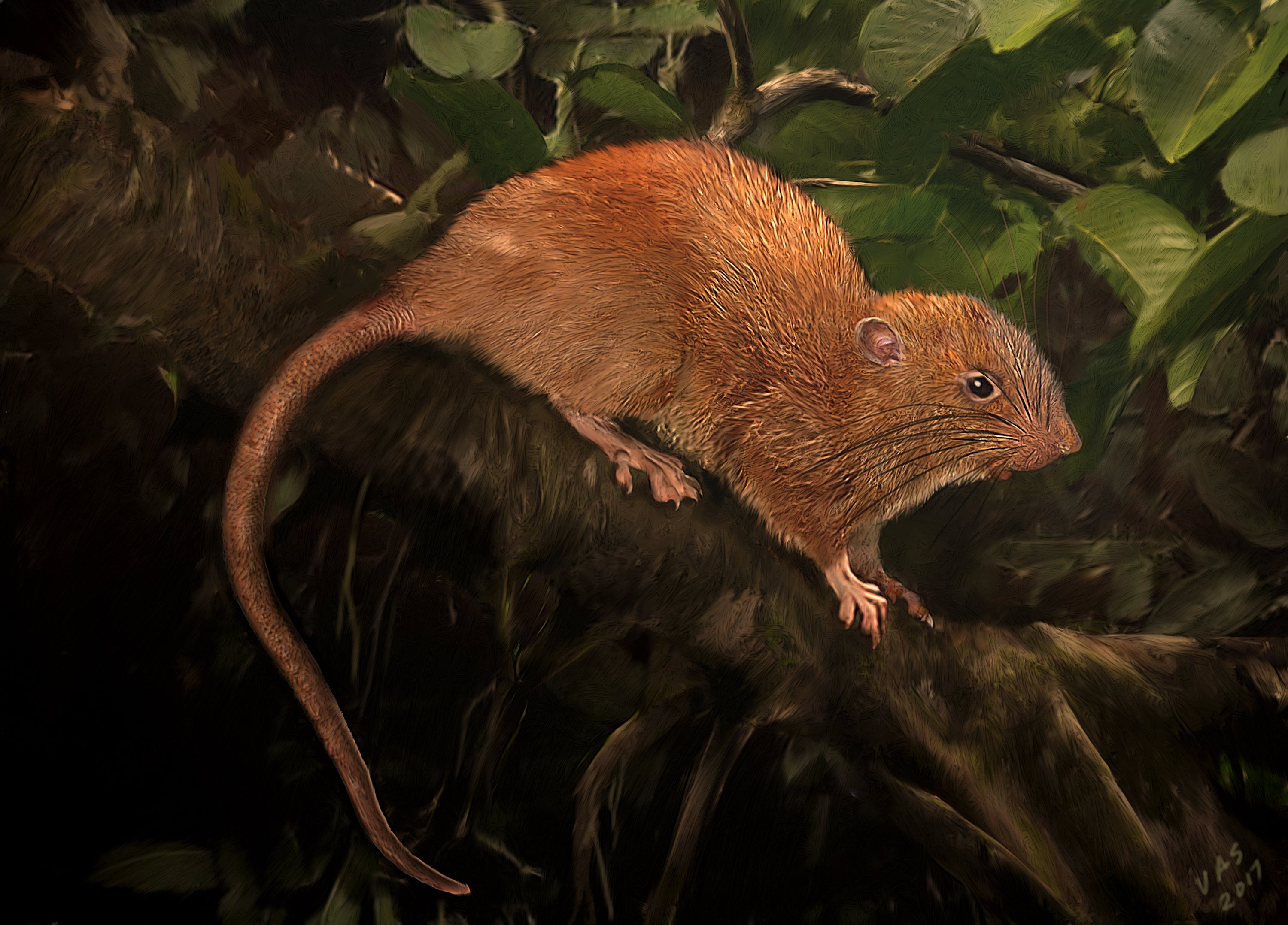 Giant Tree-Dwelling, Coconut-Eating Rat Species Discovered - Scientific  American