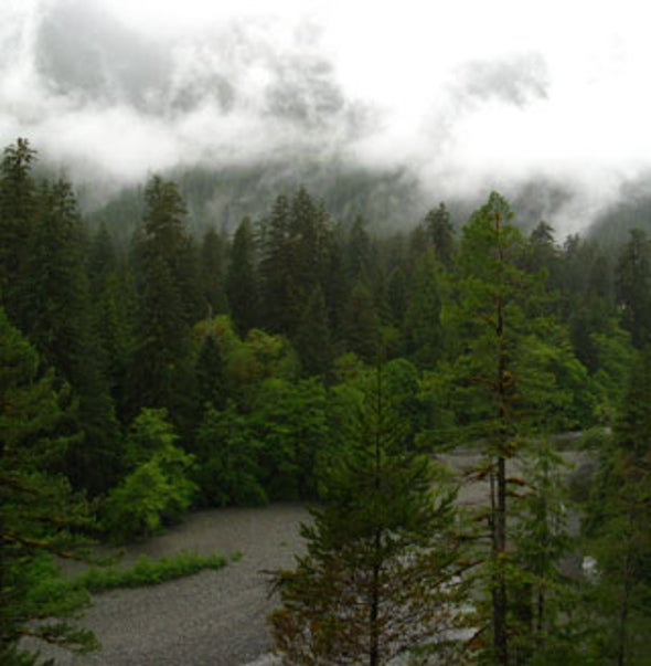 Old-Growth Forests Help Combat Climate Change