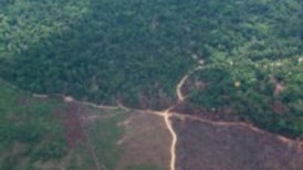 Satellites Find Less Deforestation Than Expected, But Still Far Too Much