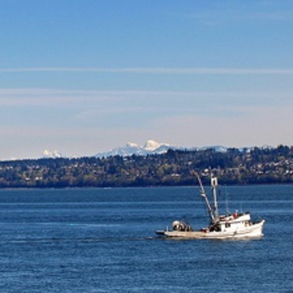 Puget Sound Chemistry Transformed by Climate Change and Runoff