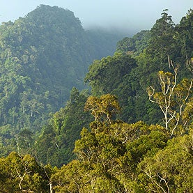 Rich Nations Agree to Fund Forest Protection for Climate