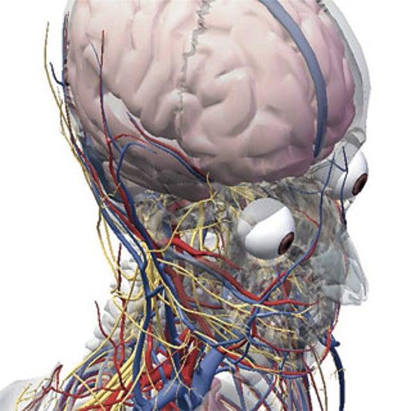 Gross Anatomy Via Your Computer [Slideshow]