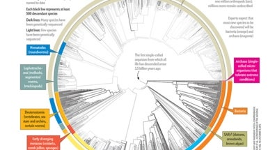 All 2.3 Million Species Are Mapped into a Single Circle of Life - Scientific American