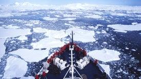 Arctic Marine Mammals Swim Up to the Microphone