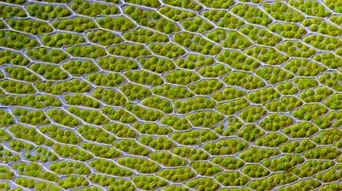 Bionic Leaf Makes Fuel from Sunlight, Water and Air