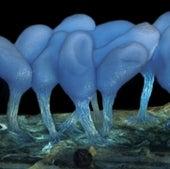 Slime molds: