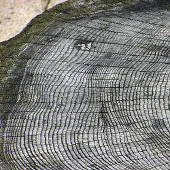 Ring around the Climate: Monsoon Rains Leave Lasting Traces in Trees [Video]