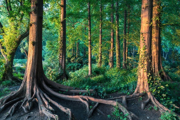 The Idea That Trees Talk to Cooperate Is Misleading