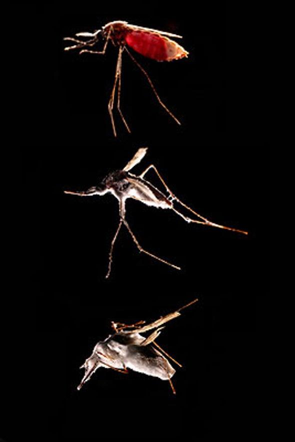 Fungal Mosquito Control