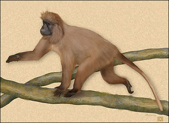 New Primate Species