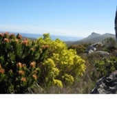 The fynbos