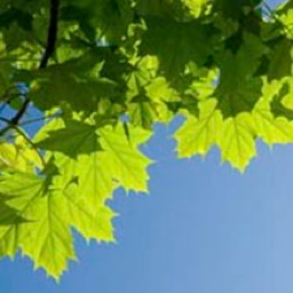 Higher Temperatures Lessen Plants' Ability to Store CO2