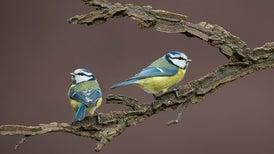 Why Do Birds Get Divorced?