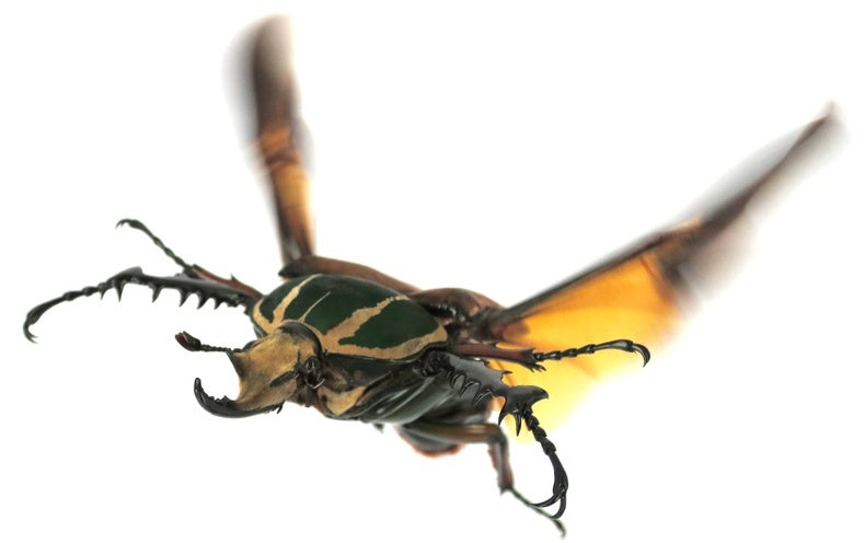 Why Beetles Fly Like Superman