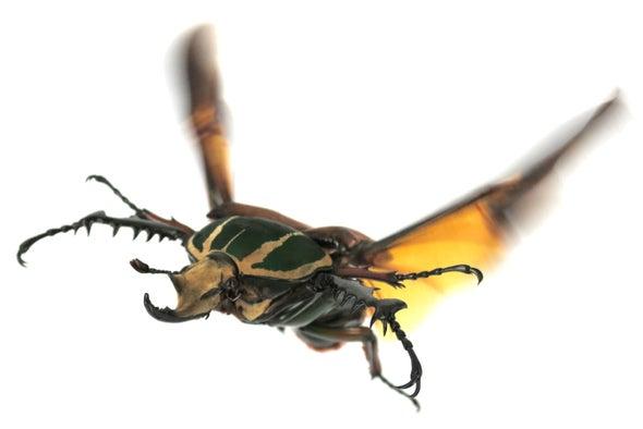 Why Beetles Fly Like Superman