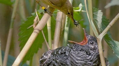 Mob Scene: Birds Create a Flap to Fend Off Invaders