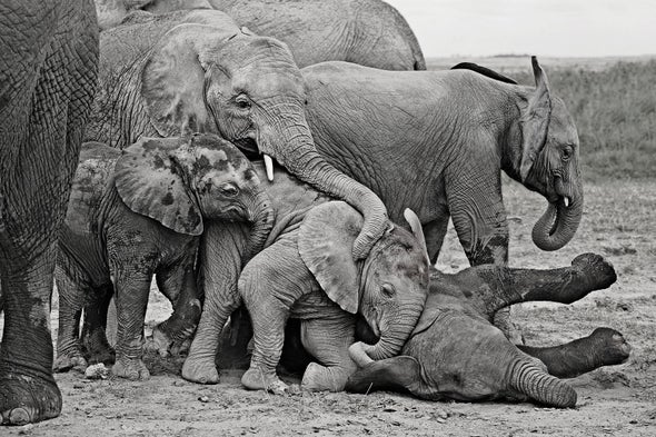 Play Is Serious Business for Elephants