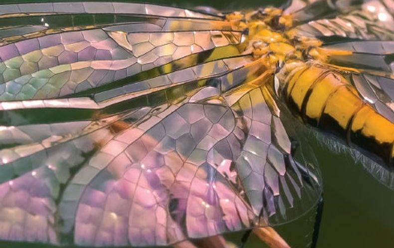 Book Review: <i>Dragonflies</i>