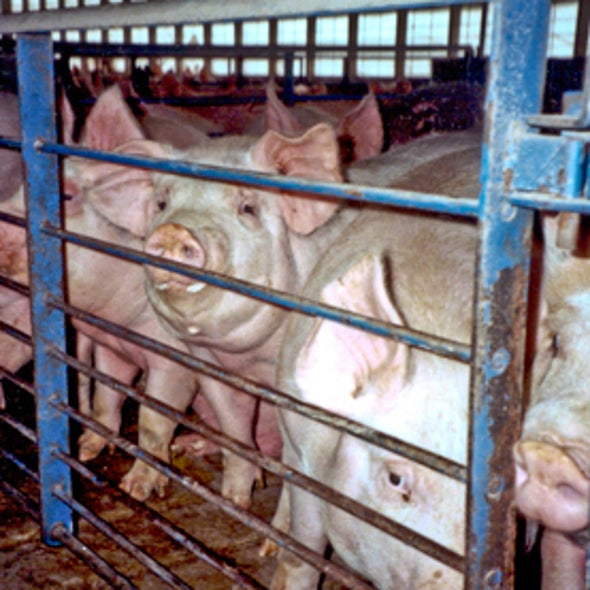 How Much Do Antibiotics Used on the Farm Contribute to the Spread of Resistant Bacteria?