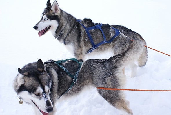 What Siberian Burials Reveal about the Relationship between Humans and Dogs