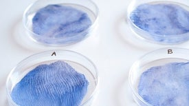 The Environment's New Clothes: Biodegradable Textiles Grown from Live Organisms