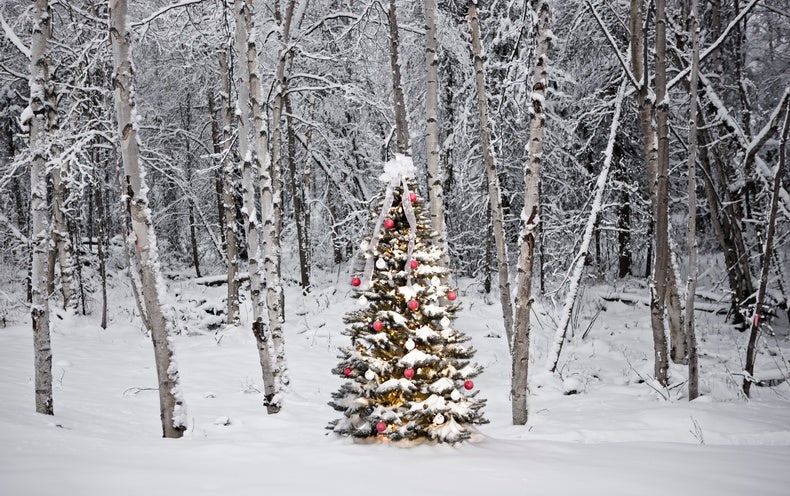 Snow Christmas Usa Chance 2021 What Happens To White Christmases As The World Warms Scientific American