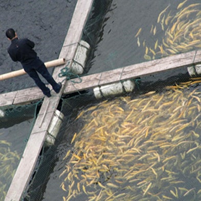 Harvest of fears farm raised fish may not be free of for How does mercury get into fish