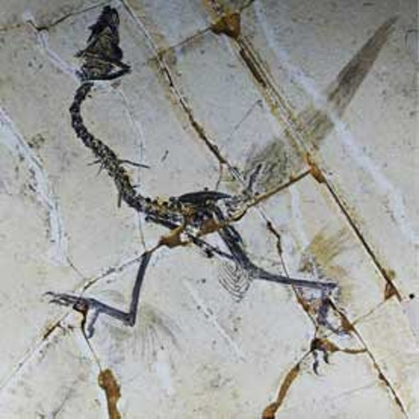 First Birds Might Have Flown on 4 Wings