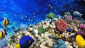 U.N. Aims to Protect More of the High Seas