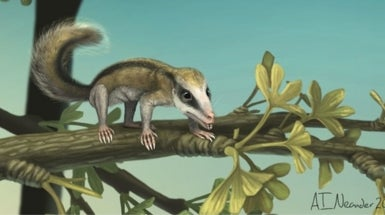 2 Jurassic Mini-Mammals Discovered in China
