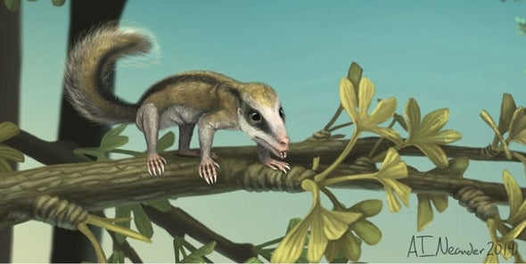 2 Jurassic Mini-Mammals Discovered in China