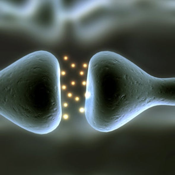"""Signaling Neurons Make Neighbor Cells """"Want In"""""""