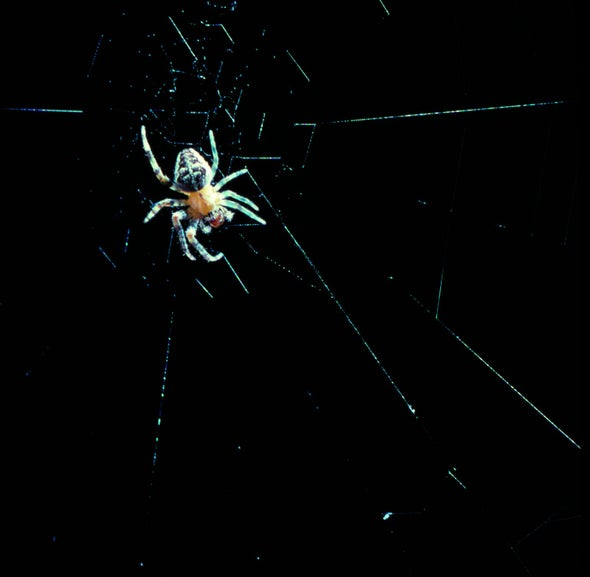 Spider Legs Build Webs without the Brain's Help
