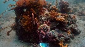 """Sea-thru"" Brings Clarity to Underwater Photos"