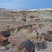 9. Petrified Forest