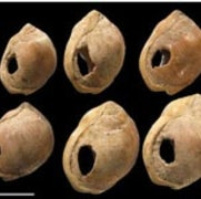 Ancient Shells May Be Earliest Jewels