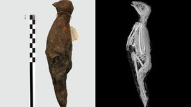 Unprecedented 3-D view inside Animal Mummies