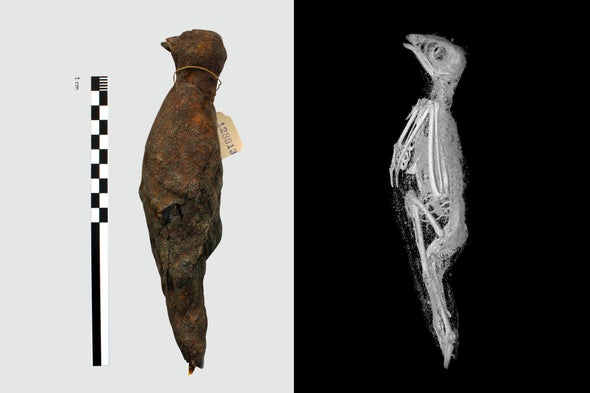 Unprecedented 3-D view inside Animal Mummies