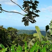 Will Tropical Forests Play a Role in Cutting U.S. Greenhouse Gas Emissions?