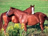 DNA Hints at Origins of Domestic Horses