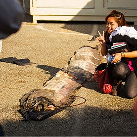 Oarfish's Death Is Boon to Scientists