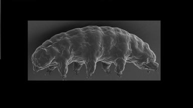 Water Bears' Super Survival Skills Give Up Secrets