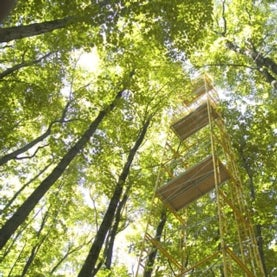 forest-tower