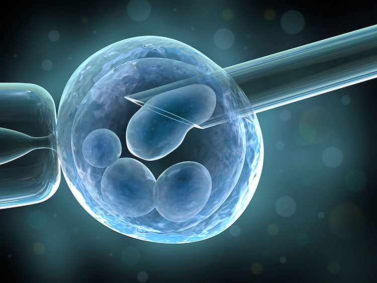 U.S. Panel Green-Lights Creation of Male 3-Person Embryos