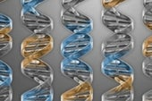Scientists Synthesize Bacteria with Smallest Genome Yet